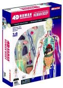 4D Vision 33cm Transparent Human Body