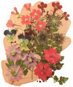 Pressed flowers mixed pack pink collection, lobelia, larkspur, star flower, verbena, baby breath, pansy, foliage